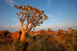 canvas print picture Quiver tree landscape, Namibia