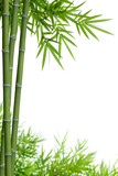Fototapety bamboo with leaves