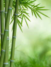 arbre de bambou avec des feuilles