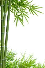 bambou avec des feuilles