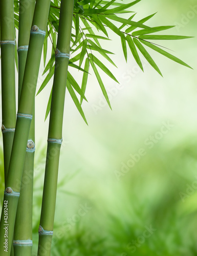bamboo tree with leaves © Okea
