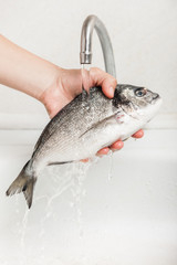 Hand holding gilthead fish food