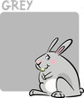 Color Grey and Rabbit Cartoon