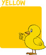Color Yellow and Chick Cartoon