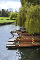 Tied up wooden Punts