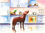 Dog in kitchen