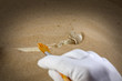 Archeology and forensics bones in sand