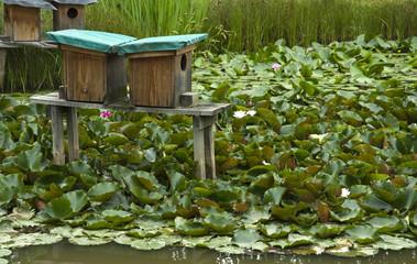 Entenhäuser auf einem Teich