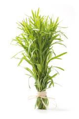 Tarragon herb bunch