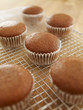 Close up of cupcakes cooling on wire rack