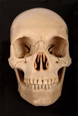 Skull Frontal