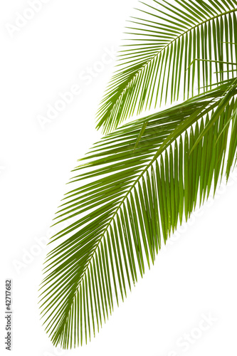 Aluminium Bonsai Leaves of palm tree