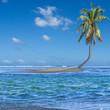 île cocotier