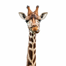 "Постер, картина, фотообои ""Funny Giraffe face"""