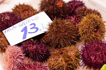 Sea urchins with price tag in euros