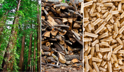 Wood pellet production collage