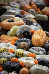 Crop of pumpkins, squash and gourd