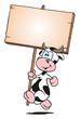 Cow running with Board