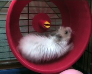 Cheerful hamster