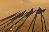 Camels shadows over Erg Chebbi at Morocco