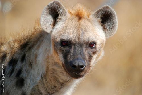 Tuinposter Hyena Hyena