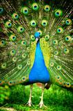 Fototapeta dziób - piękny - Ptak