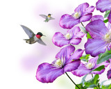 Flowers And Hummingbirds