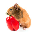 the guinea pig and a red pepper