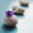 canvas print picture - wellness-stones
