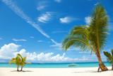 Palm trees on a tropical beach - Fine Art prints