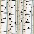 Square illustration of trunks birches.