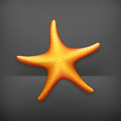 Sea Starfish, vector