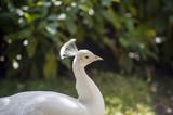 Fototapeta ogród - park - Ptak
