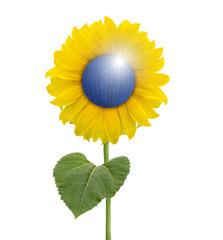 Sonnenblume mit Sonnenkollektor