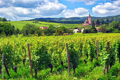 Vignoble à Hunawihr , Alsace (Fr).
