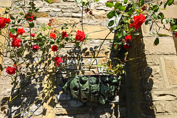 Beautiful, red climbing roses on the wall