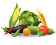 still life of vegetables vector illustration