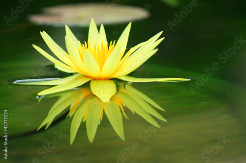 Lotus background blur.
