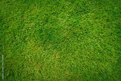 piekny-zielona-trawa-wzor