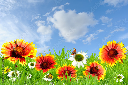 Foto op Canvas Lieveheersbeestjes Colorful flowers
