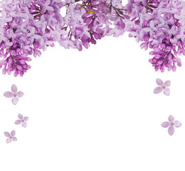 lush lilac flower isolated half frame