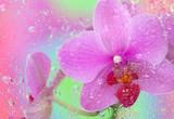 Fototapete Pflanze - Hintergrund - Blume