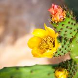 Fototapete Blühen - Botanik - Pflanze