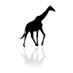 Girafe en ombre chinoise
