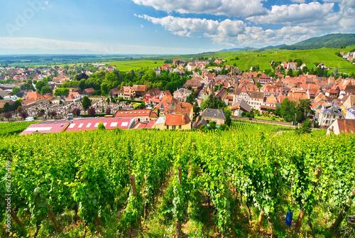 Vignoble à Ribeauvillé , Alsace (Fr).