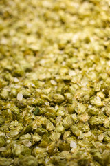 Dried hops flowers for beer