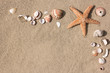 Seesterne und Muscheln mit Platz für Text
