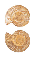 The two sides of an ammonite fossil shell isolated on white