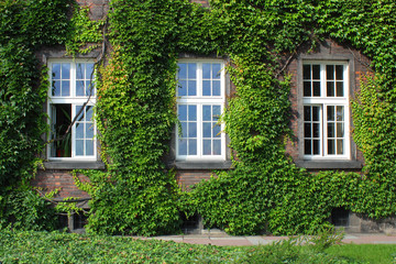 three windows on overgrown wall