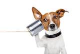 Fototapety dog on the phone
